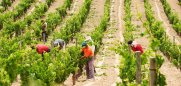 viticultura-buena